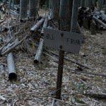 竹林の途中に道標。
