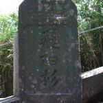 飛柏槙(ビビャクシン)の石碑。