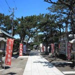 森戸大明神の境内には松と柏槙(ビャクシン)がが多く植えられています。御神木の飛柏槙にちなんだものでしょうか。