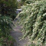 宝戒寺の萩。公道から一歩入ると一瞬にして見事な萩に癒されます。