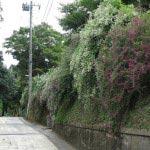 長寿寺脇の萩の名所