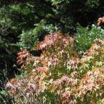 神武寺は山地にあり、9月20日過ぎにはほんの少し紅葉が始まっていました。