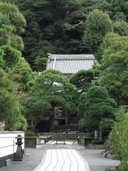 江ノ島詣の旧道から望む本蓮寺。緑がきれいです。背後の山の向かい側が龍口寺です。