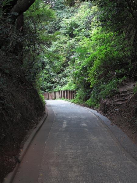 亀ヶ谷坂切通し。舗装されてしまっていますが、雰囲気はよいです。