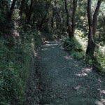神武寺表参道。徐々に森々としてきます。気分爽快。