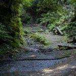 天園ハイキングコース獅子舞付近の山道。