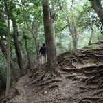 葛原岡・大仏ハイキングコース。北鎌倉から源氏山公園間の景色。