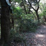 左に道があります。この道は長谷大谷戸口に近い、浅間神社に出られます。