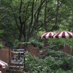 樹ガーデンの景観。