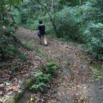 葛原岡・大仏ハイキングコース、北鎌倉〜源氏山公園間の道。