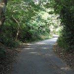 源氏山から入るとしばらく舗装路です。