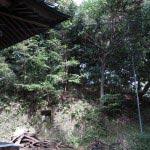 八雲神社背後の森。