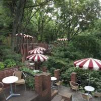 樹ガーデン。まさに森のなかの喫茶店。