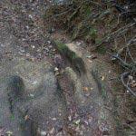 葛原岡・大仏ハイキングコース、北鎌倉〜源氏山公園間の道。随所に石や崖が切られています。