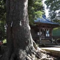 五霊神社のお社と大銀杏。