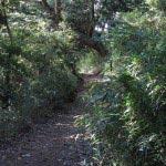 鎌倉時代の人はこんな道をよく歩いたのだろうと想像します。