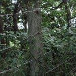 大仏が近くなると有刺鉄線があります。風致保存のためでしょうか。