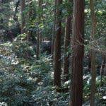 随所に杉木立があります。このあたりでも植林があるのでしょうか。