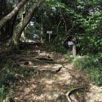 かなり大仏口に近づいてきました。ハイキングコースの案内板と樹(いつき)という森の中の喫茶店の看板があります。