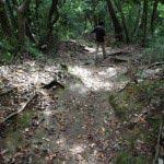 葛原岡・大仏ハイキングコース、北鎌倉〜源氏山公園間の道。森の中というのは
