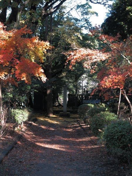 日野俊基墓近くの紅葉。