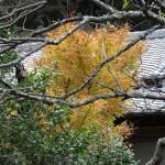光則寺の紅葉。