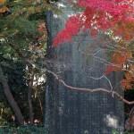 高徳院(大仏)の紅葉。大仏様の左手、大きな石碑にかかるように紅葉がみられます。