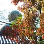 高徳院(大仏)の紅葉。大仏様の背後にある広場は銀杏に覆われていますが、いくつか紅葉もみられます。