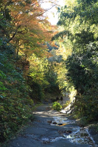 朝比奈切通しの紅葉。入口付近の紅葉を反対側から。