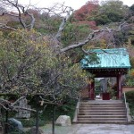 光則寺の紅葉。晩秋の光則寺門前。