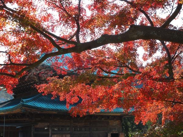 建長寺の法堂と紅葉。