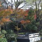 鶴岡八幡宮、神苑牡丹園の紅葉。