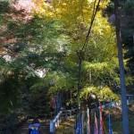 建長寺の紅葉。半僧坊へと向かう急な階段前には銀杏。