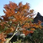 建長寺の紅葉。龍峰院。