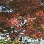 浄妙寺の紅葉。