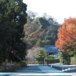 建長寺の紅葉。鎌倉学園の前あたりの木が色づいていますが、建長寺紅葉は奥に行くほど美しくなります。