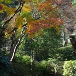 浄妙寺、喜泉庵入口の紅葉。