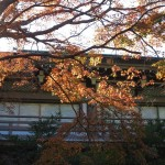 鶴岡八幡宮、柳原神池の紅葉。