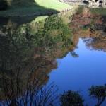 建長寺回春院の池に映る晩秋の鎌倉。