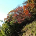 建長寺回春院の紅葉。