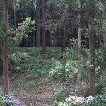 白山神社本殿周辺の平場。