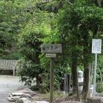 本堂から石窯ガーデンテラスに向かう道の途中にあじさいの小路があります。