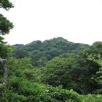 浄妙寺、あじさいの小路から望む衣張山。