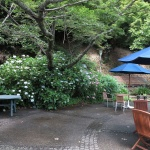 石窯ガーデンテラスの庭にもあじさいがあります。