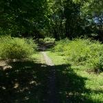 巡礼古道。山道を抜けて右手の公園に入ると道標があります。そのまま平成巡礼道に進んでみます。