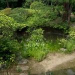 常楽寺境内の池。
