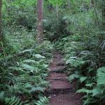 平成巡礼道は石段が敷かれている道が多いです。