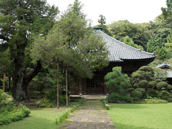 寿福寺、中門からみる本殿と柏槙(ビャクシン)。