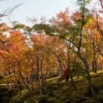 箱根美術館の紅葉。約200本のもみじと約130種類の苔が植えらています。