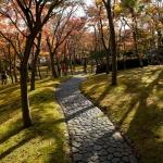 箱根美術館の紅葉。